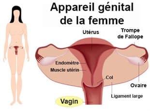 L'appareil génital de la femme, ou sexe féminin (vagin)