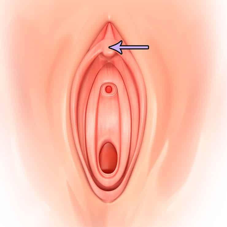 Le clitoris gonfle naturellement lors d'une stimulation sexuelle