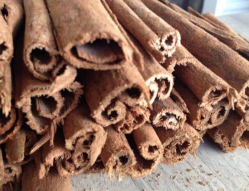 Effet du bois bandé : où trouver du bois a bander de qualité?