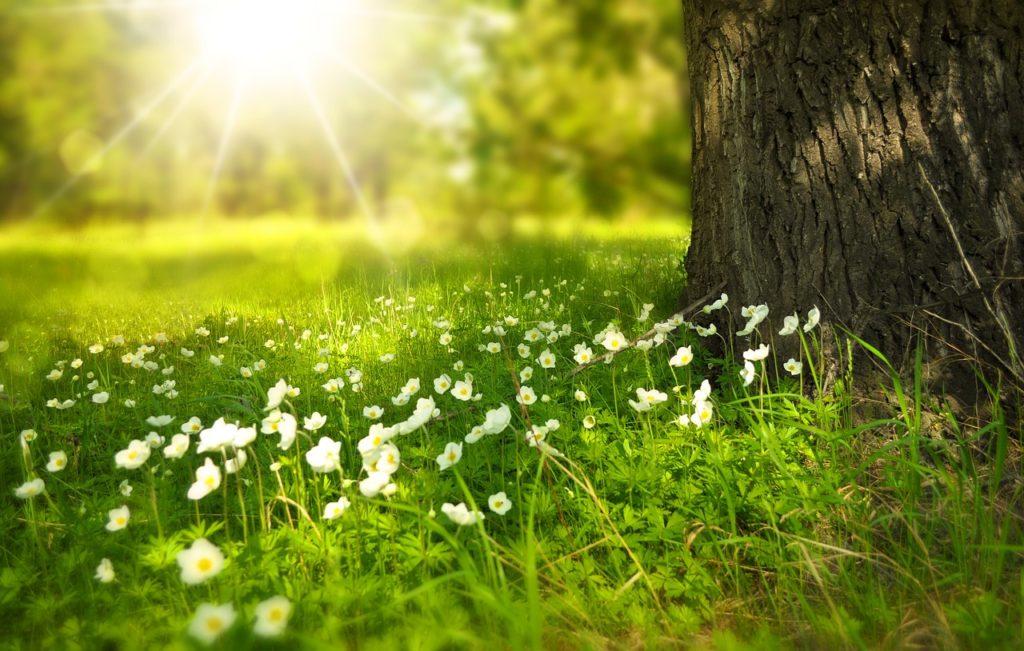 L'exposition au Soleil, et notamment l'augmentation de vitamine D qu'elle implique, permet de booster naturellement la testostérone